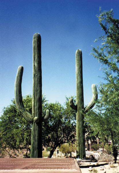 Image Of A Outdoor Artificial Cactus
