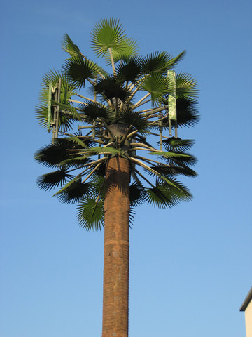 Custom Made Palm Trees Concealed Cell Tower Gallery