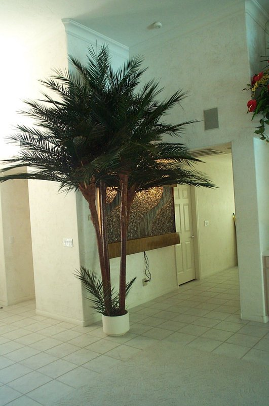 image of a Caribbean palm tree inside a building