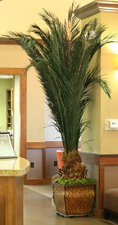 image of 3 interior artificial palms