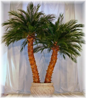 image of a preserved pheonix date palm tree